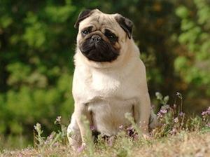 Ecraser le museau de votre chien dans ses excréments n'est pas une bonne idée !